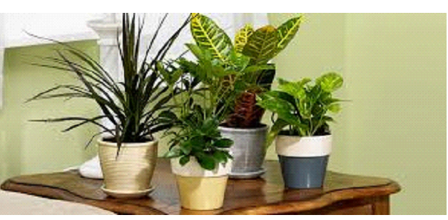 how to make plants green again